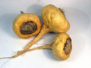 La maca : une plante tonique et stimulante !